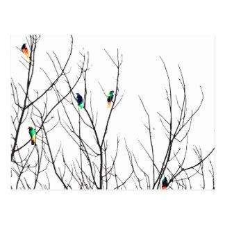 Pájaros brillantes artísticos en ramas de árbol postal