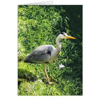 Pájaros británicos de la garza gris - warkworth tarjeta de felicitación