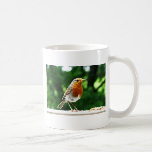 Pájaros británicos, petirrojo, fotografía de la na taza