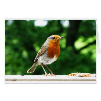 Pájaros británicos, petirrojo, fotografía de la tarjeta de felicitación