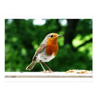 Pájaros británicos, petirrojo, fotografía de la tarjeta postal