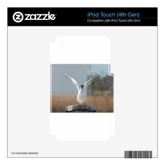 pájaros calcomanías para iPod touch 4G