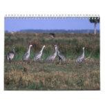 Pájaros - calendario