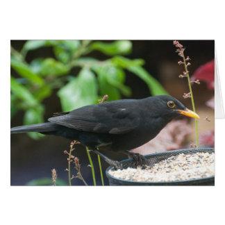 Pájaros cantantes británicos: mirlo masculino tarjeta de felicitación