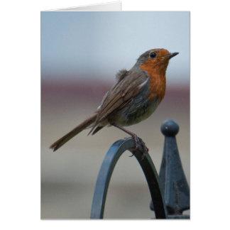 Pájaros cantantes británicos: Petirrojo joven Tarjeta De Felicitación
