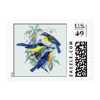 Pájaros cantantes florales ropa y regalos del franqueo