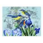 Pájaros cantantes florales ropa y regalos del vint tarjeta postal