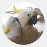 Pájaros cariñosos blancos bonitos etiquetas redondas