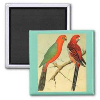 Pájaros coloridos del Amazonas, 1878 Imán Cuadrado