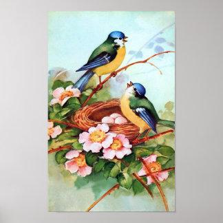 Pájaros coloridos en poster de la primavera