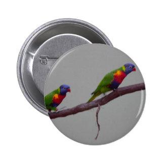 Pájaros coloridos que caminan en una foto de la pin redondo 5 cm