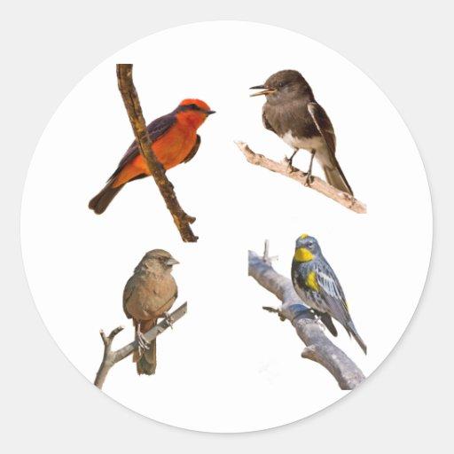 Pájaros comunes pegatinas redondas