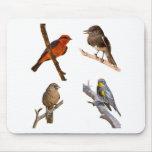 Pájaros comunes tapetes de raton