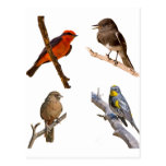 Pájaros comunes tarjeta postal