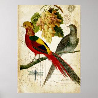 Pájaros con cresta del vintage en la carta póster