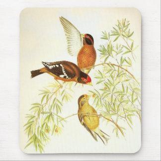 Pájaros con gafas del pinzón del vintage de Mousep Alfombrillas De Ratón