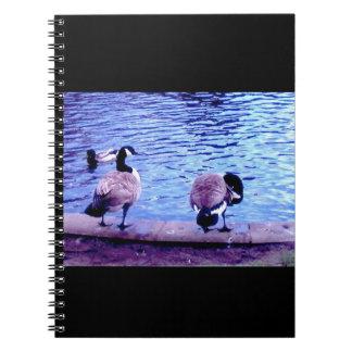 Pájaros de agua libros de apuntes con espiral