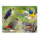 Pájaros de Australia Postales