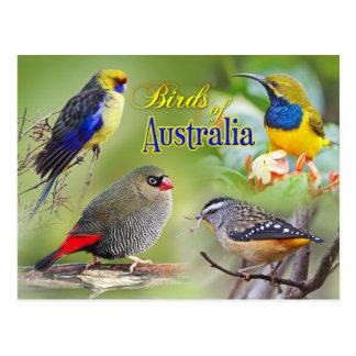 Pájaros de Australia Tarjetas Postales