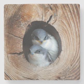 Pájaros de bebé posavasos de piedra