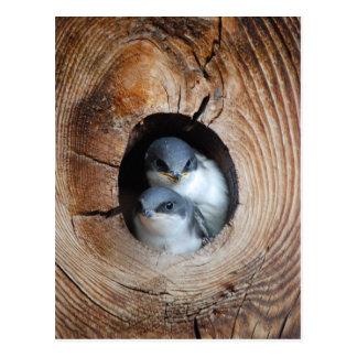 Pájaros de bebé postales