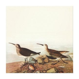 Pájaros de Coastal del vintage Lona Estirada Galerías