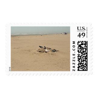 Pájaros de diverso sello de la pluma