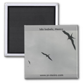 Pájaros de fragata (Fragata), Isla Isabela, México Imán Cuadrado