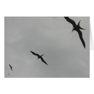 Pájaros de fragata (Fragata), Isla Isabela, México Tarjeta De Felicitación