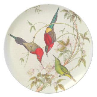Pájaros de Goulds Sunbird Plato De Cena