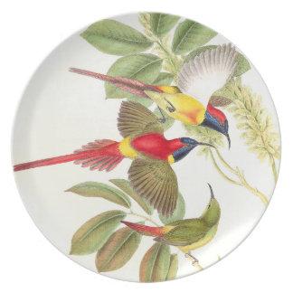 Pájaros de Goulds Sunbird Platos