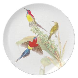 Pájaros de Goulds Sunbird Platos Para Fiestas