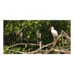 Pájaros de Ibis en San Blas México Tarjeta Fotográfica