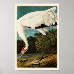 Pájaros de John James Audubon de la grúa que Póster
