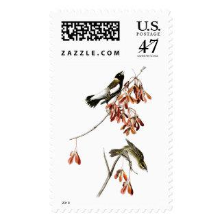 Pájaros de John James Audubon del pájaro del arroz Sello Postal