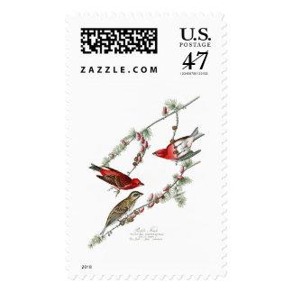 Pájaros de John James Audubon del pinzón púrpura Sello Postal