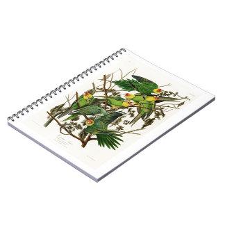 Pájaros de Juan Audubon del loro de Carolina de Libro De Apuntes