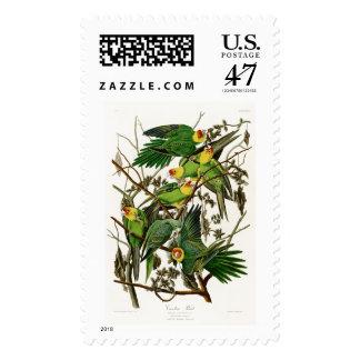 Pájaros de Juan Audubon del loro de Carolina de Sello
