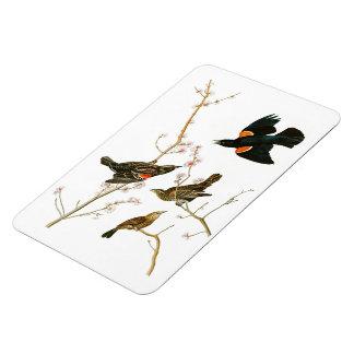 Pájaros de Juan Audubon del mirlo del pantano de Iman Flexible