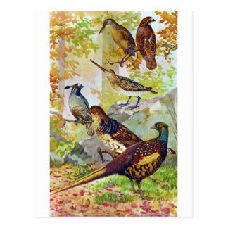 Pájaros de juego 1902 Chromolithograph de piedra Tarjeta Postal