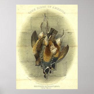 Pájaros de juego americanos 1861 póster
