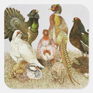 Pájaros de juego pegatina cuadrada