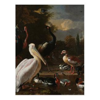 Pájaros de la bella arte tarjeta postal