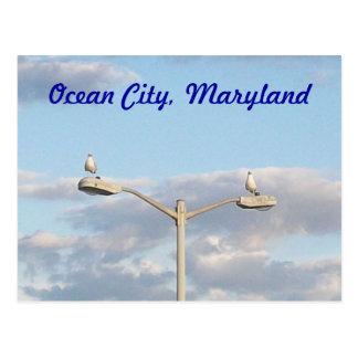 Pájaros de la ciudad del océano postal