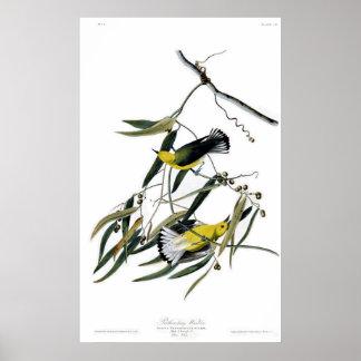 Pájaros de la curruca del protonotario de América  Póster