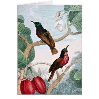 Pájaros de la enredadera de Senegal Tarjetas