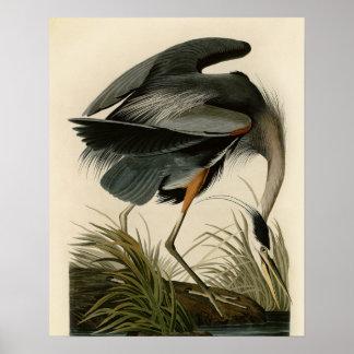 Pájaros de la garza de gran azul de Audubon Impresiones