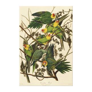 Pájaros de la impresión del loro de Audubon Impresión En Lona