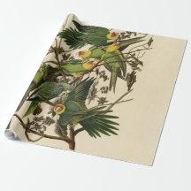 Pájaros de la impresión del loro de Audubon Papel De Regalo