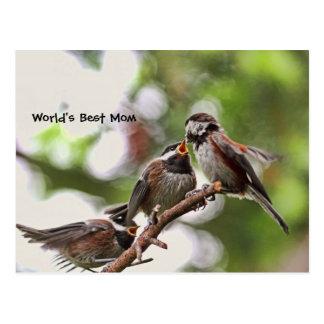 Pájaros de la madre y de bebé tarjeta postal